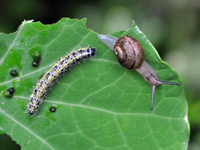 snail-caterpillar-05